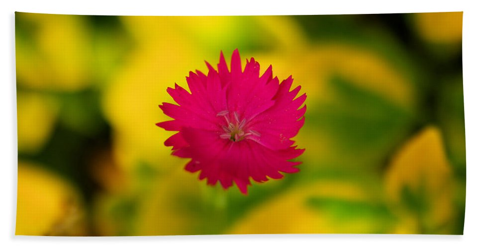 Flower Bath Sheet featuring the photograph A Button From The Blur by Jeff Swan