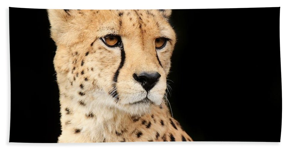 Cheetah Hand Towel featuring the photograph A Cheetah Named Jason by Christopher Miles Carter