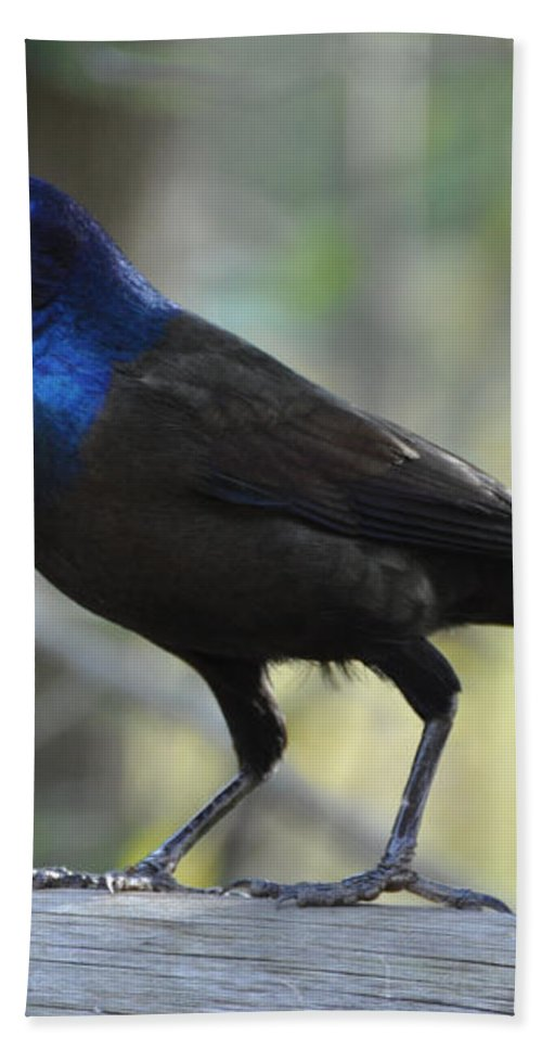 Birds Bath Towel featuring the photograph A Clever Thief by Jan Amiss Photography