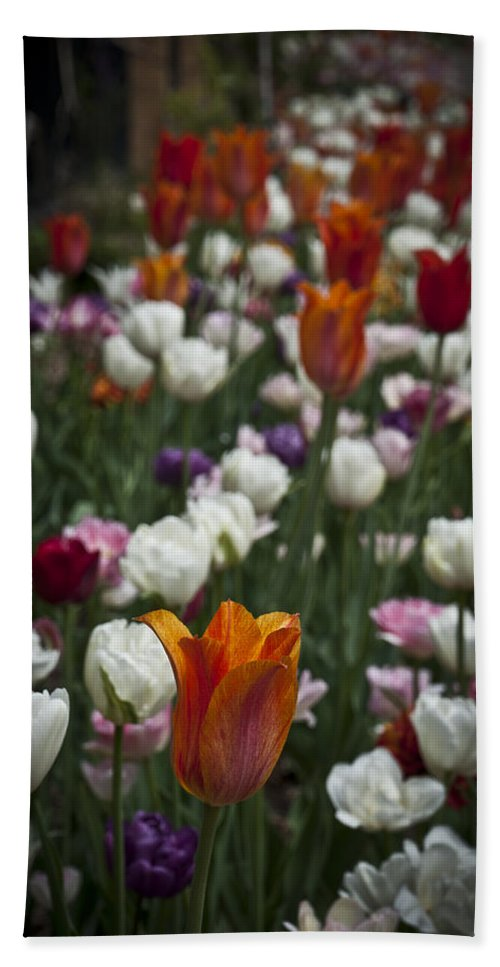 Gardening Hand Towel featuring the photograph A Cluster Of Tulips by Deborah Klubertanz