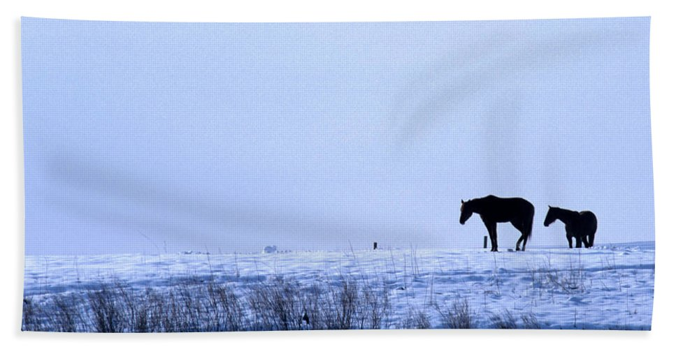 Horses Bath Sheet featuring the photograph A Cold Winter by Jerry McElroy