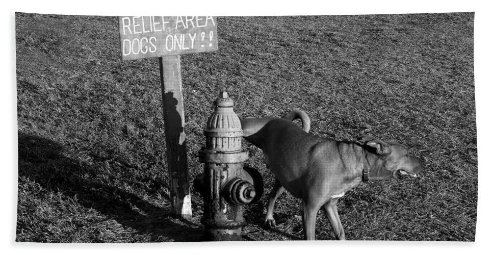 Dog Bath Towel featuring the photograph A Dog's Life by David Lee Thompson