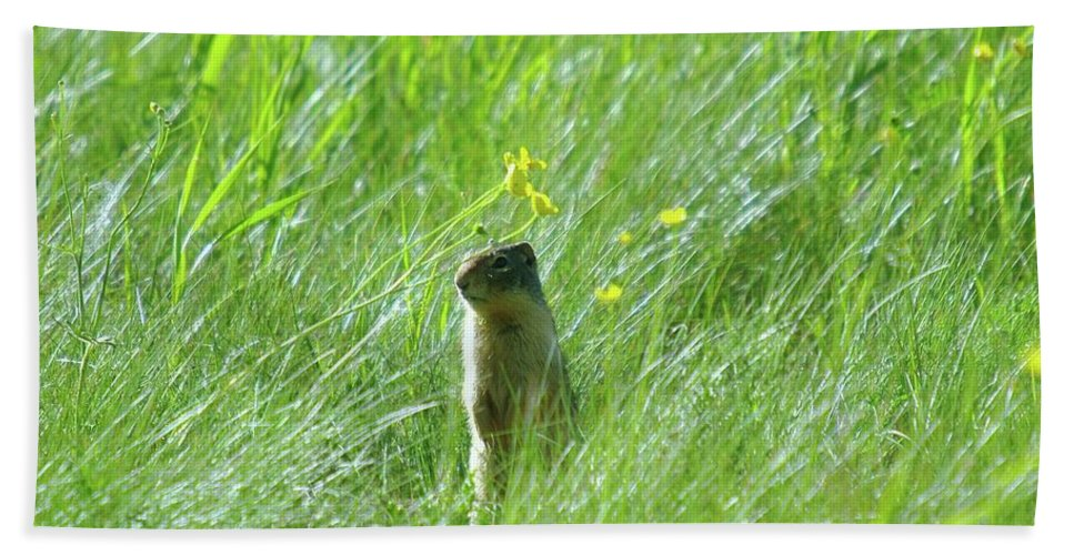 Gophers Bath Sheet featuring the photograph A Fernie Gopher by Jeff Swan