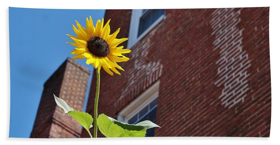 Sunflower Hand Towel featuring the photograph A Field Of Her Own by Beth Deitrick