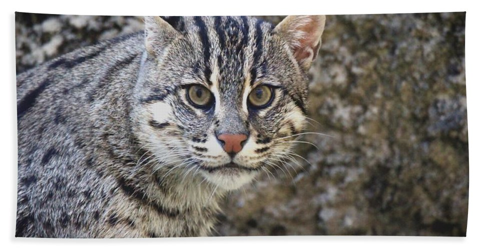 Fishing Cat Hand Towel featuring the photograph A Fishing Cat Portrait by Christopher Miles Carter