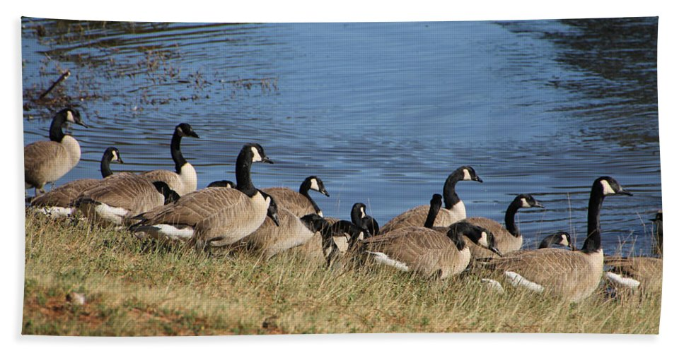 Bird Hand Towel featuring the photograph A Gathering Of Geese by Laura Martin