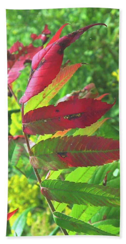 Leaves Bath Towel featuring the photograph A Hard Tough Summer by Ian MacDonald