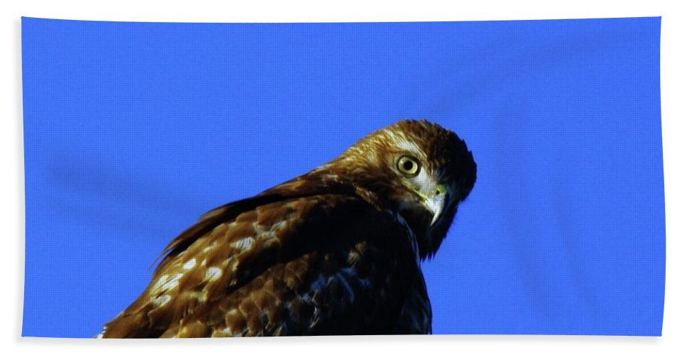 Hawks Bath Towel featuring the photograph A Hawk Looking Back by Jeff Swan