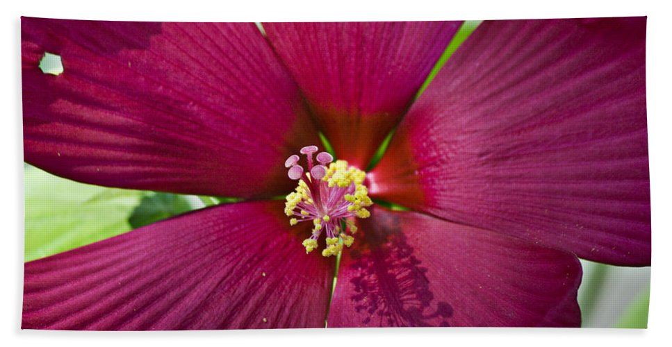 Hibiscus Bath Sheet featuring the photograph A Hole in One by Teresa Mucha