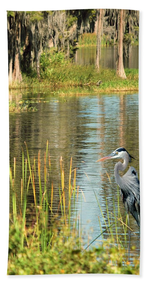 Great Blue Heron Hand Towel featuring the photograph A Lovely Day by Adele Moscaritolo