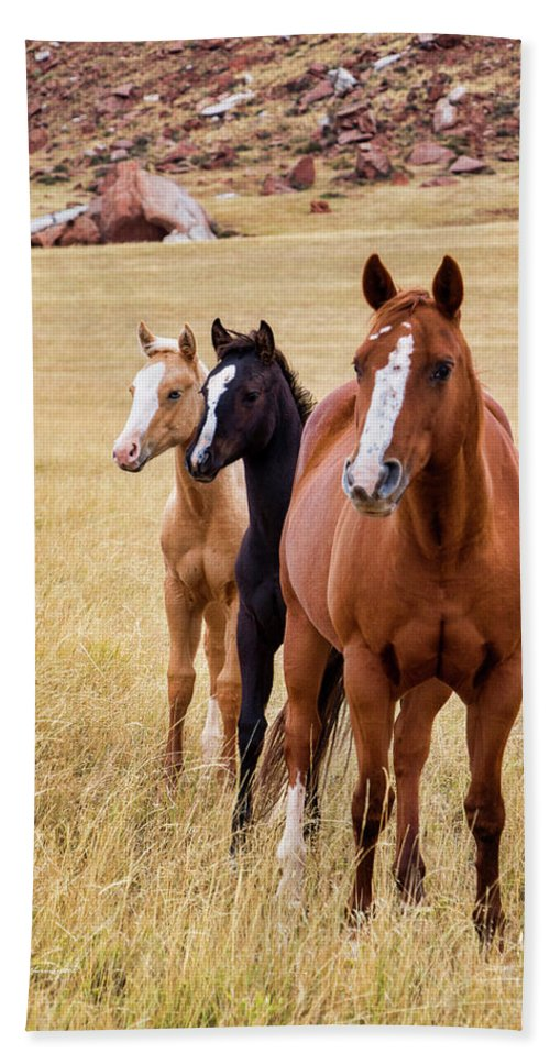 Horses Bath Sheet featuring the photograph A Mare And Two Friends by Sam Sherman