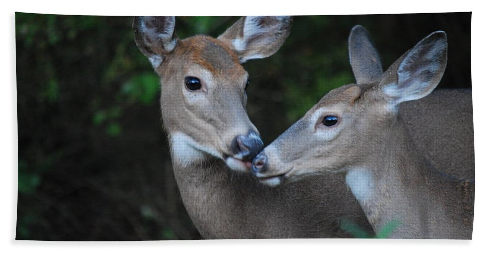 Deer Bath Sheet featuring the photograph A Moms Touch by Lori Tambakis