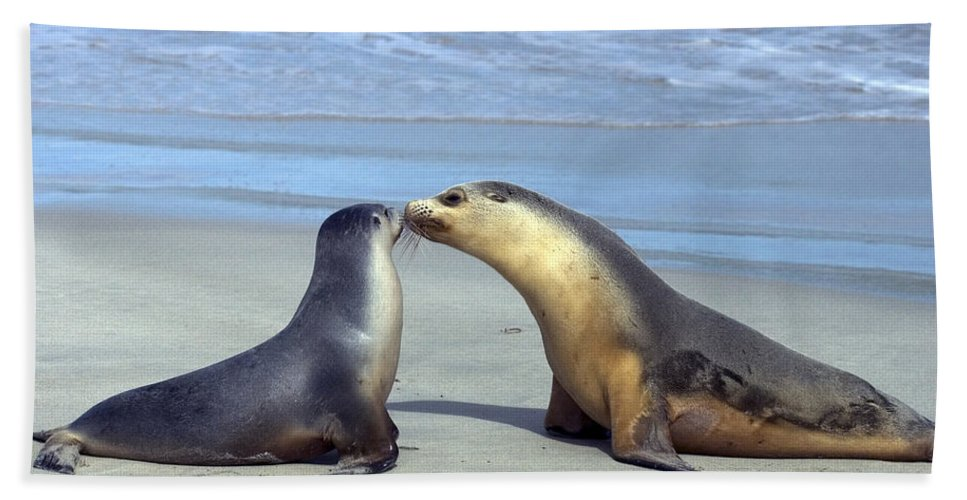 Sea Lion Bath Towel featuring the photograph A Mothers Love by Mike Dawson