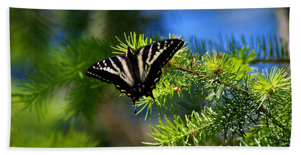 Butterflies Bath Sheet featuring the photograph A Pale Swallowtail by Ben Upham III