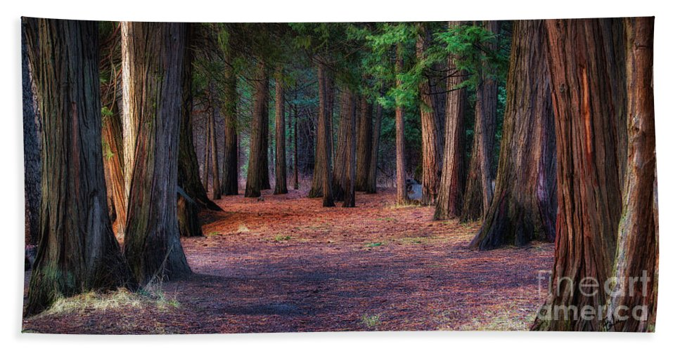 Yosemite National Park Hand Towel featuring the photograph A Path Of Redwoods by Anthony Bonafede