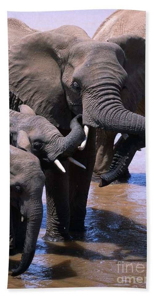 Africa Hand Towel featuring the photograph A Refreshing Moment by Sandra Bronstein