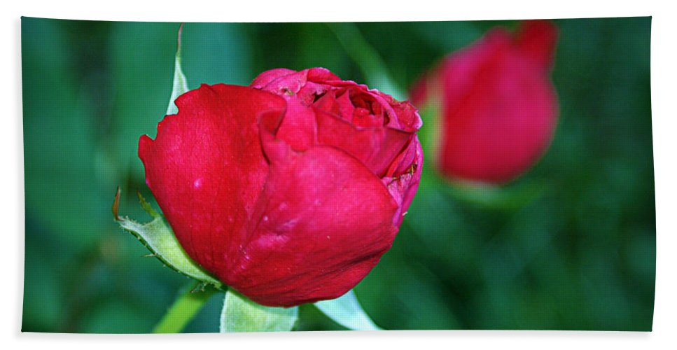 Rose Bath Sheet featuring the photograph A Rose By Any Other Name by Cricket Hackmann