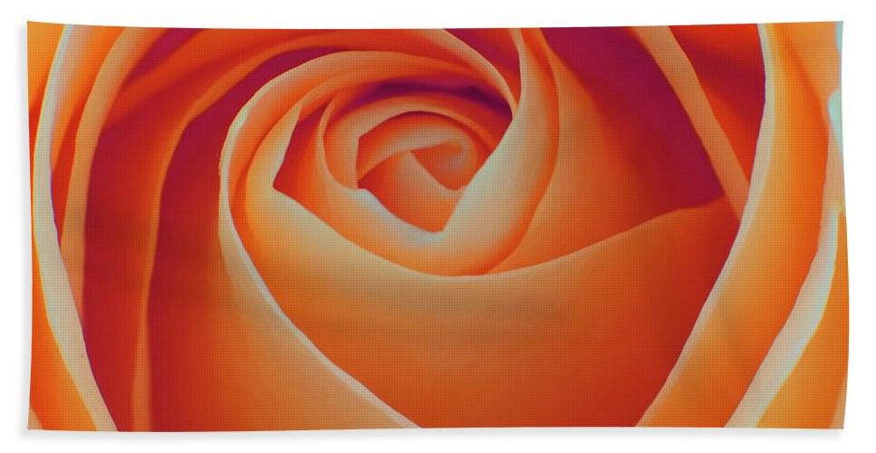 Rose Hand Towel featuring the photograph A Rose Like None Other by Joshua Roberts