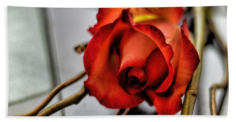 A Rose On Bamboo Bath Sheet featuring the photograph A Rose On Bamboo by Diana Mary Sharpton