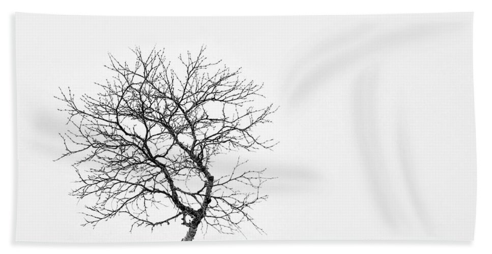 One Tree Bath Sheet featuring the photograph A Simple Tree by Dave Bowman
