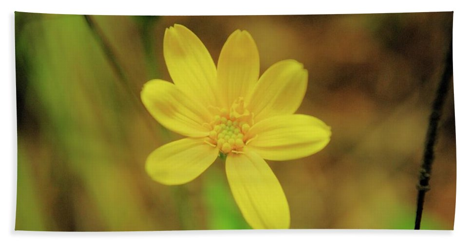 Flowers Bath Sheet featuring the photograph A Soft Yellow Flower by Jeff Swan