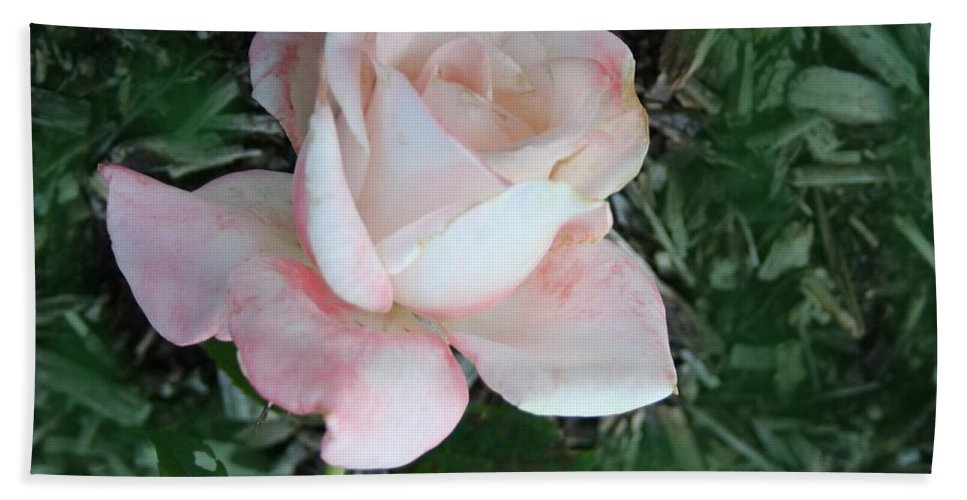 Perfect Hand Towel featuring the photograph A Special Rose by Jacquie King