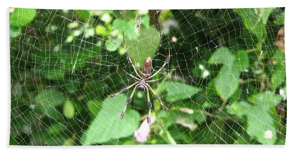 Spider Hand Towel featuring the photograph A Spider Web by Stacey May