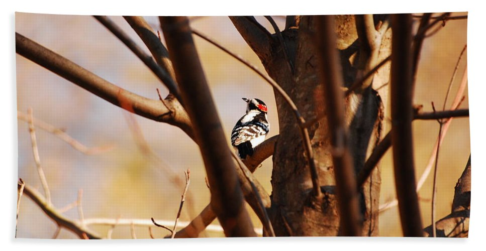 Woodpecker Hand Towel featuring the photograph A Spot Of Red by Lori Tambakis