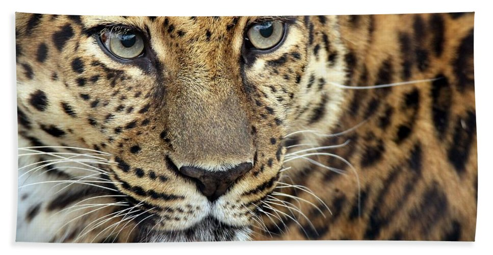 Amur Leopard Hand Towel featuring the photograph A Thing Of Beauty by Christopher Miles Carter