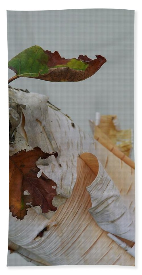 Birch Bath Towel featuring the photograph A Touch Of Fall by Gale Cochran-Smith