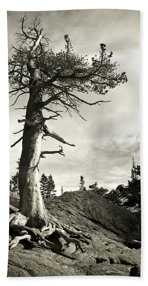 Tree Hand Towel featuring the photograph A Tough Life by Marilyn Hunt