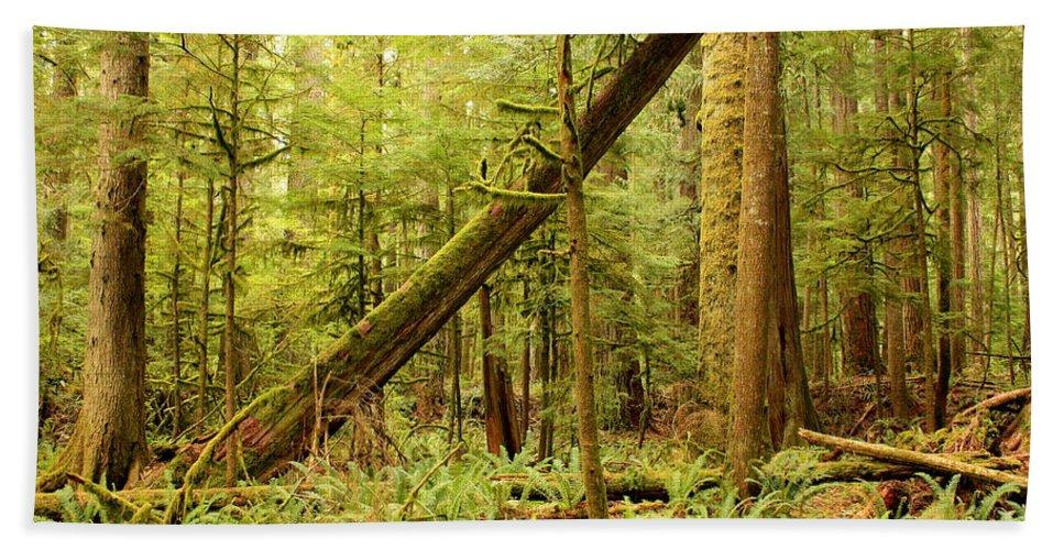 Washington Landscape Bath Sheet featuring the photograph A Whisper In The Rainforest by Carol Groenen