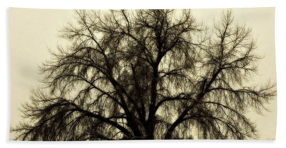 Tree Hand Towel featuring the photograph A Winter's Day by Marilyn Hunt