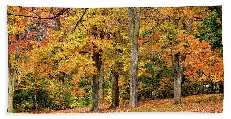 Scenery Bath Towel featuring the photograph A Wonderful Walk In The Park by Maria Keady