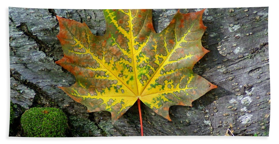 Maple Leaf Bath Sheet featuring the photograph A Work Of Nature's Art by Ben Upham III