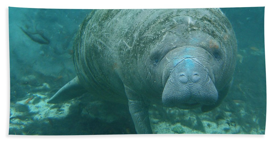 Joy Bath Sheet featuring the photograph About To Meet A Manatee by Kimberly Mohlenhoff