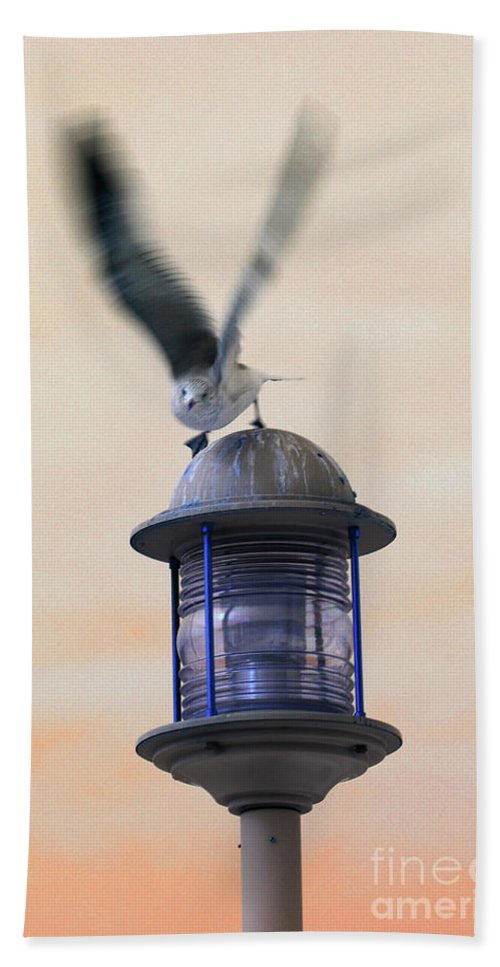 Seagull Hand Towel featuring the photograph About To Take Flight by Karol Livote