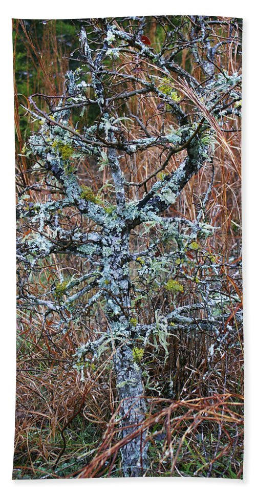 Abstract Hand Towel featuring the photograph Abstract And Lichen by Marilyn Hunt