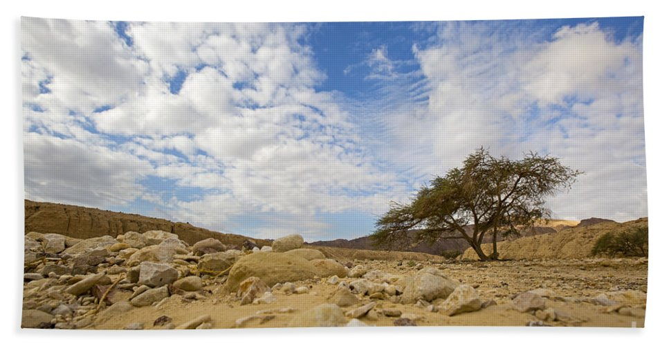 Absence Hand Towel featuring the photograph Acacia Tree In The Desert by Alon Meir