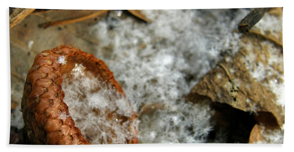 Acorn Bath Sheet featuring the photograph Acorn Cap Filled With Snow by Kimberly Mohlenhoff