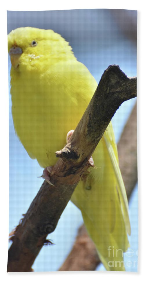 Budgie Hand Towel featuring the photograph Adorable Close Up Of A Yellow Parakeet by DejaVu Designs