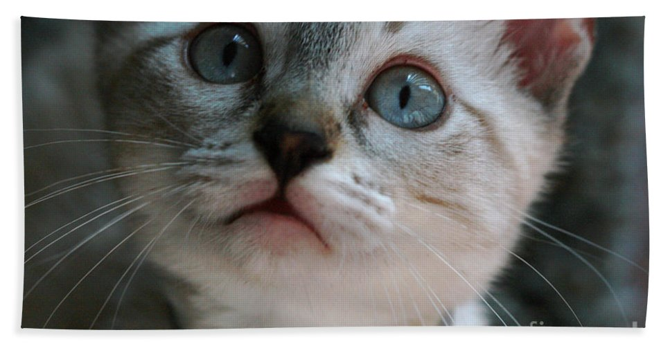 Cats Hand Towel featuring the photograph Adorable Kitty by Kim Henderson
