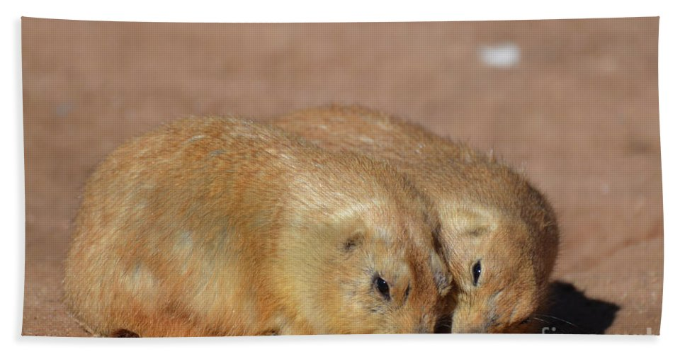 Prairie-dog Hand Towel featuring the photograph Adorable Pair Of Prairie Dogs Cuddling Together by DejaVu Designs