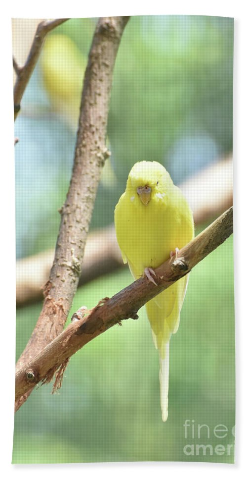 Budgie Hand Towel featuring the photograph Adorable Yellow Budgie Parakeet Relaxing In A Tree by DejaVu Designs
