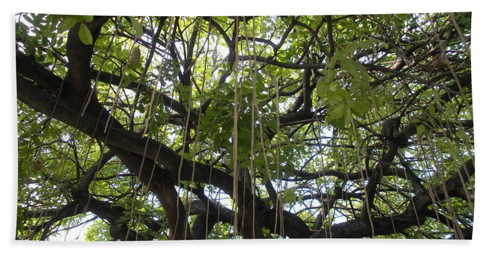 Trees Hand Towel featuring the photograph Aerial Network I by Maria Bonnier-Perez