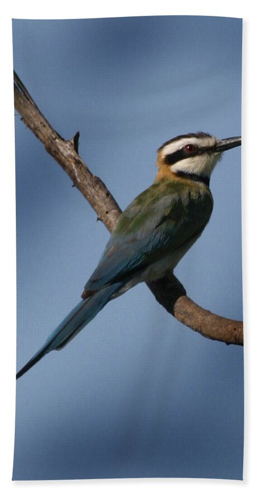 Bee Eater Bath Sheet featuring the photograph African Bee Eater by Joseph G Holland