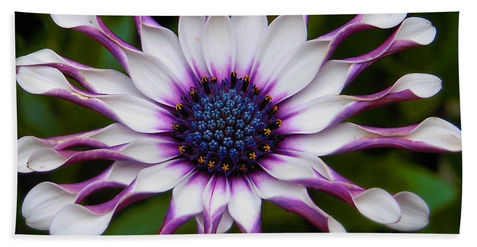 African Bath Sheet featuring the photograph African Daisy by Svetlana Sewell