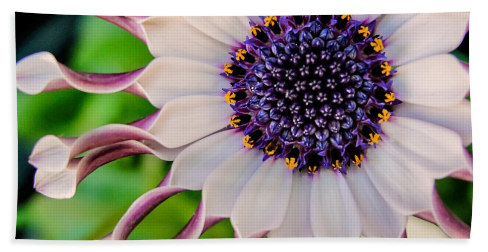 African Daisy Hand Towel featuring the photograph African Daisy by TK Goforth