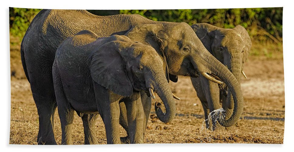 01-animal Bath Sheet featuring the photograph African Elephant by Myer Bornstein