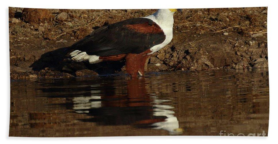 Birds Bath Sheet featuring the photograph African Fish Eagle by Myrna Bradshaw